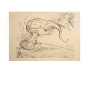 Günter Grass - Aal und Fischköpfe